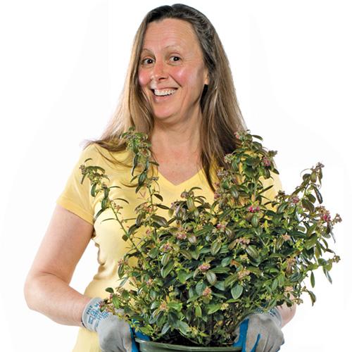 Kandis byrd, uw gardener